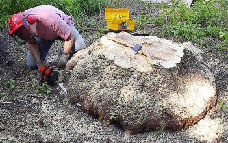 phil-cutting-burl