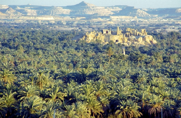 Travel-to-Siwa-Oasis-5-Days-Adventure-Tour-From-Cairo