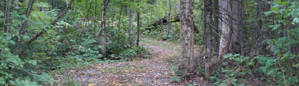דרכי עצים